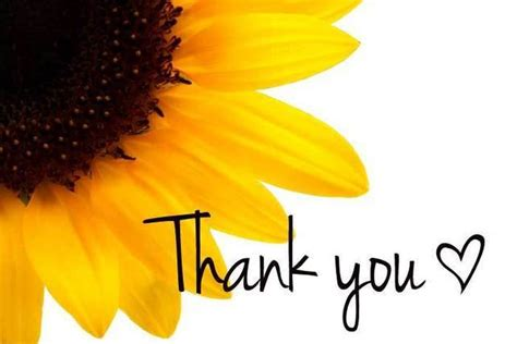 Sunflower Thank You Cards   Folksy