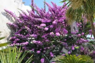 fleurs arbustes jardin meilleures id 233 es cr 233 atives pour