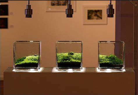 cara membuat aquascape iwagumi nano ide kreasi membuat mini aquascape atagaleri net