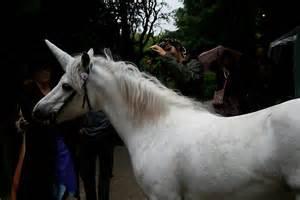 quot unicorns exist quot by amanda gazidis redbubble