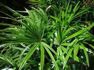 tips trends indoor plants by rick eckersley share design