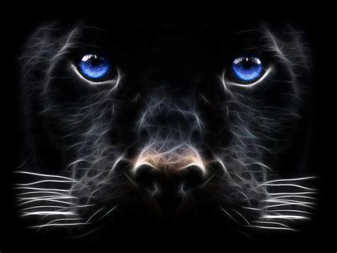black panther black panther animals wallpaper 13128439 fanpop