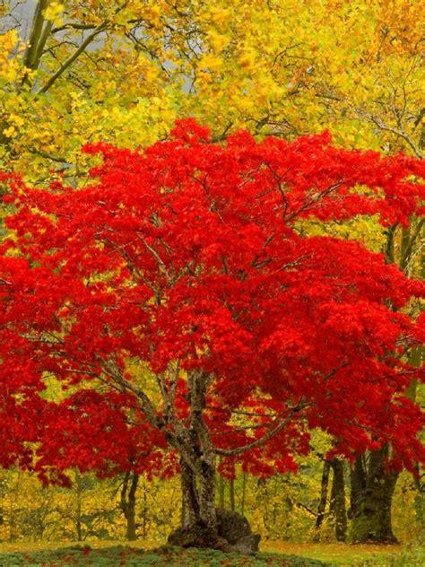 scenic fall trees wallpaper   retina ipad
