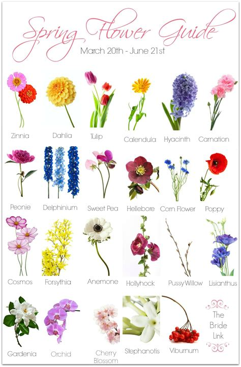 different types of flowers with names chart www imgkid
