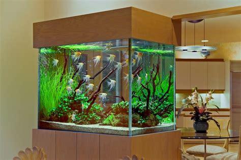 Que Faut Il Pour Un Aquarium by D 233 Cor Aquarium 233 L 233 Gant Pour Que Vos Poissons Soient Heureux
