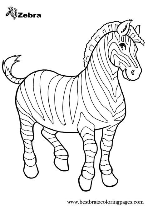 blank zebra coloring page 66 best images about coloring zoo on pinterest coloring