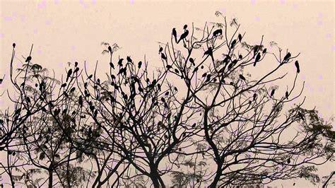 imagenes arboles minimalistas p 225 jaros vuelan entre los 225 rboles el 1 176 de enero de 2013