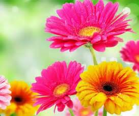 3d Flower Pictures - 3d flower android apps on google play