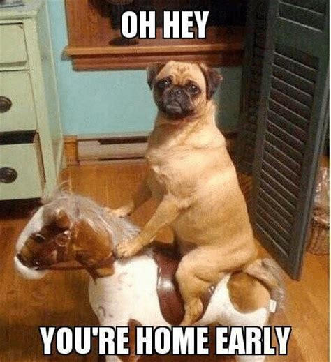 Funny Animal Meme Pictures - most funny animal memes and humor pics quotes and humor