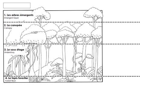 free coloring pages of layers of the rainforest printable