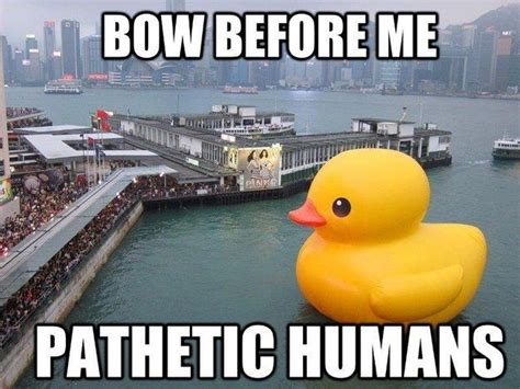 Duck Memes - and no better duck count ducks and dr who