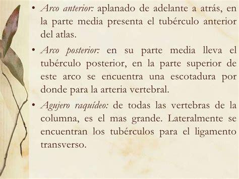 ponticulus posticus en el arco posterior del atlas columna vertebral cervicales