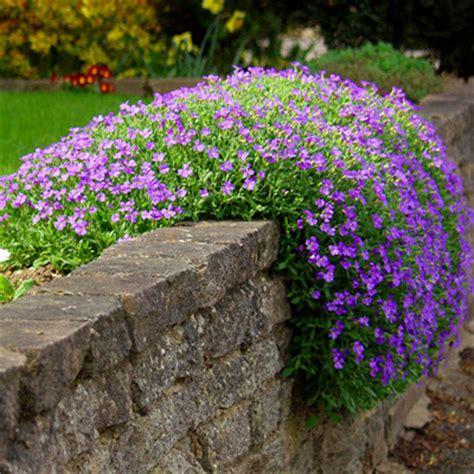 fiori per aiuola perenni piante perenni per giardino roccioso