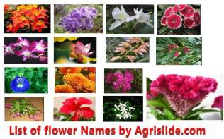 list of flowers flower names more photos
