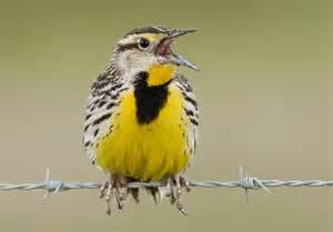 bird studies canada