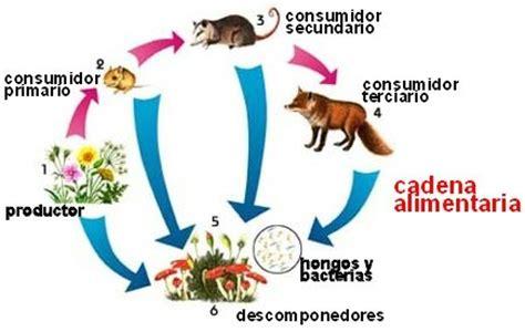 cadena alimenticia hongos y bacterias la nutrici 243 n en los ecosistemas c