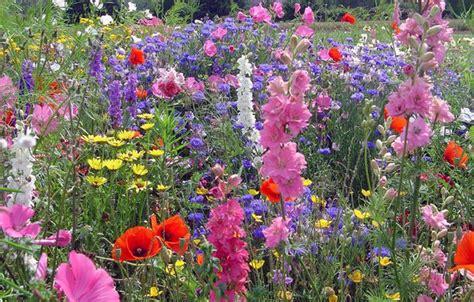 semi prato fiorito agraria massa un bel prato fiorito