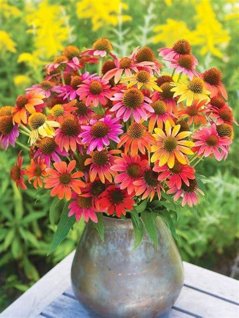 colorful coneflowers flowers bouquets pinterest