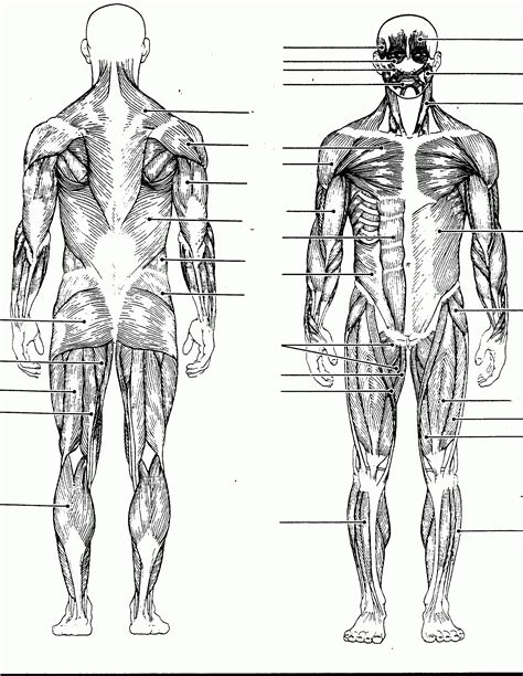 the muscular system coloring pages coloring home