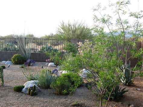 landscape design tucson az sonoran gardens inc