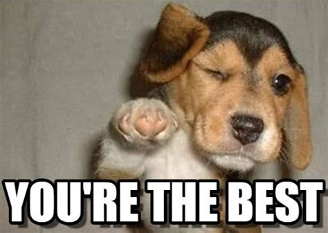 Your The Best Meme - dvd talk forum view single post christian store owner