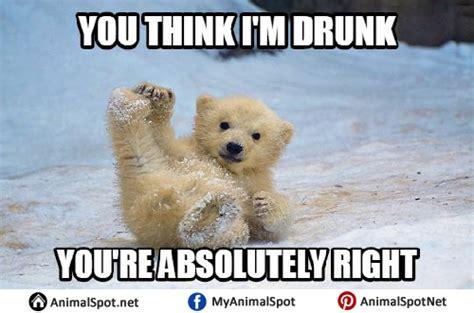 Dancing Polar Bear Meme - dancing polar bear meme image mag