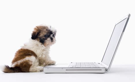 how to keep a puppy busy tips on how to keep your busy