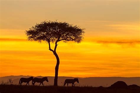 imagenes i love kenia los 5 mejores safaris de 193 frica