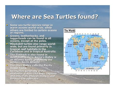 Where They Found sea turtle release