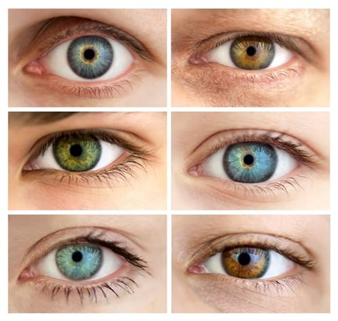 genetics eye color genetics of eye color