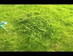 Klee Vom Rasen Entfernen 5163 by Klee Im Rasen Entfernen