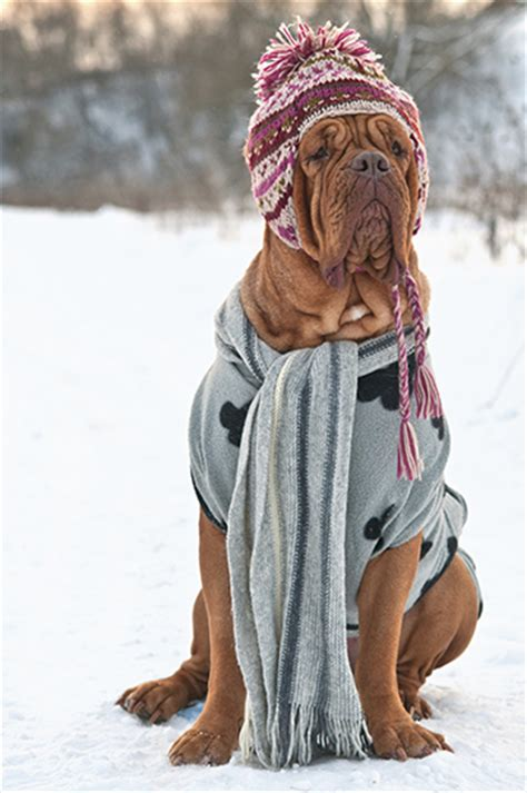 house temperature for dogs in winter 11 winter weather tips as told by adorable dogs blogs cdc