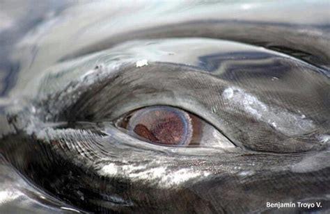 whale eye whale eye beautiful