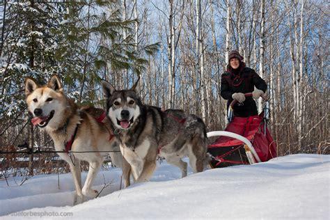 sledding mn winter odyssey yurt trip white wilderness sled trips
