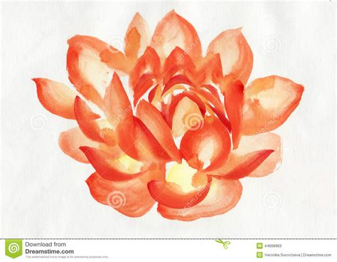 orange lotus flower www imgkid com the image kid has it