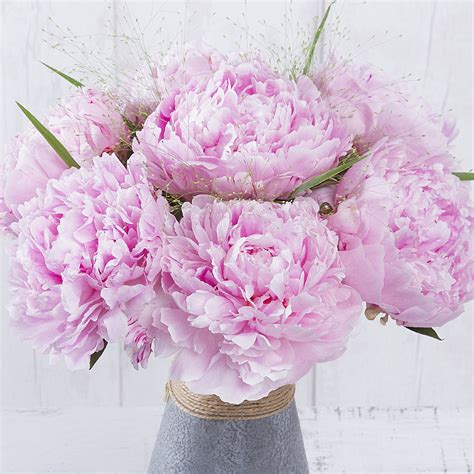 benches co uk pink peonies peonies by post summer flowers by post