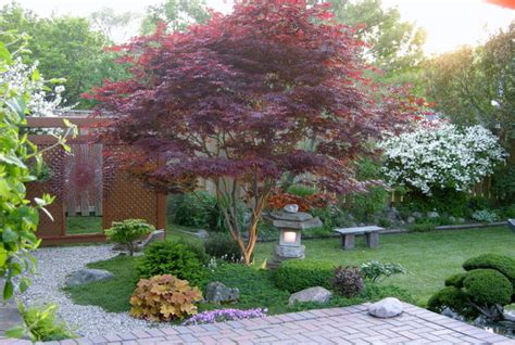 best trees for front yard landscaping 5 best behaved trees to grace a patio