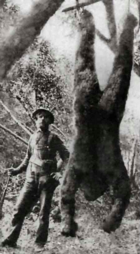 Bigfoot natural history