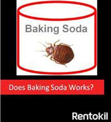 does baking soda kill bed bugs my pest control quick tips rentokil singapore