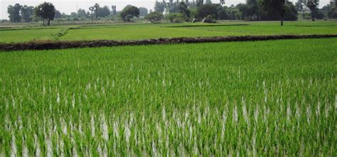 500 Sqft by 38 Katha Ready Agriculture Farm Land For Sale At Laksam