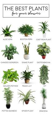 Best Plants For Bathrooms by The Best Bathroom Plants The Tao Of