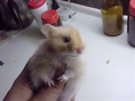 Baby Hamsters Cute