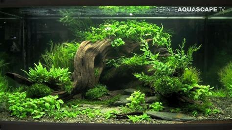 aquascape tank aquascaping with small rocks for crafts