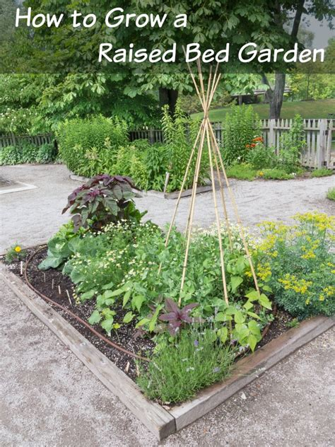 how to start a garden bed how to start a raised bed garden for your veggies how