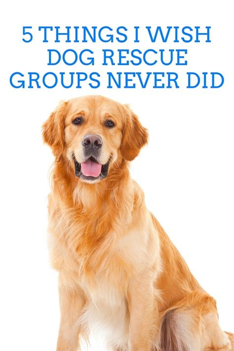 rescue groups 5 things i wish rescue groups would never do thatmutt a