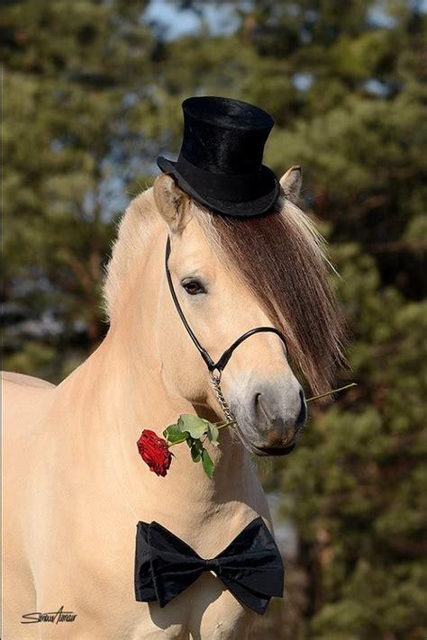 cute hairstyles for horses 279 best images about grooming braiding beauty styles