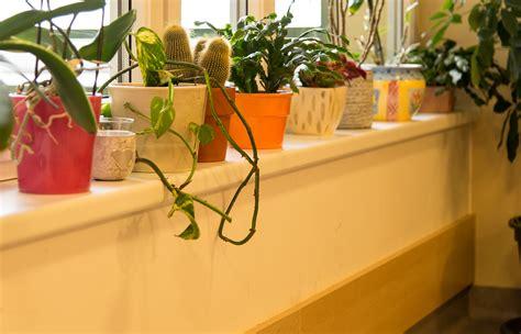 fensterbrett pflanzen evangelisches alten und pflegeheim bad goisern