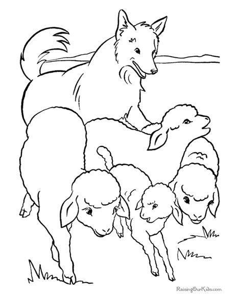 coloring pages of sheep dogs herd to color 011