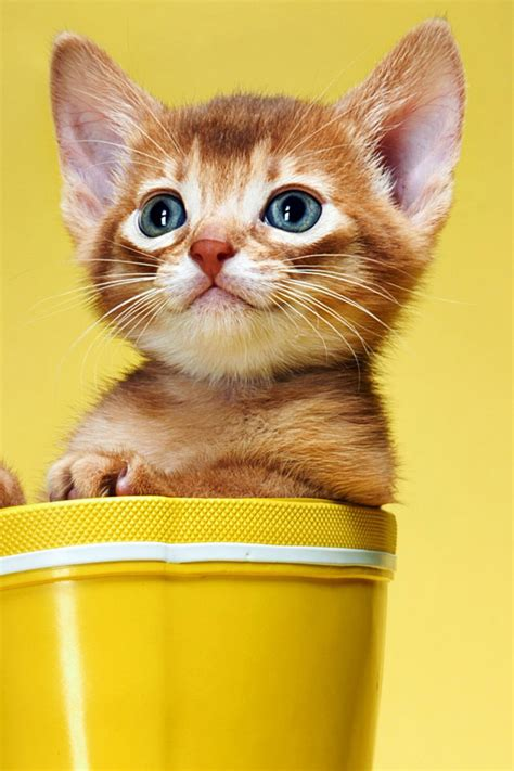 cat nice wallpaper 20 cute baby animal pictures download free iphone wallpapers