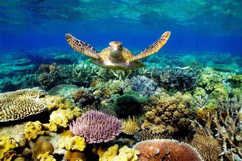 coral images   pixelstalknet